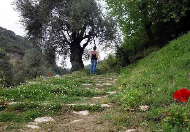 végétation du Pélion