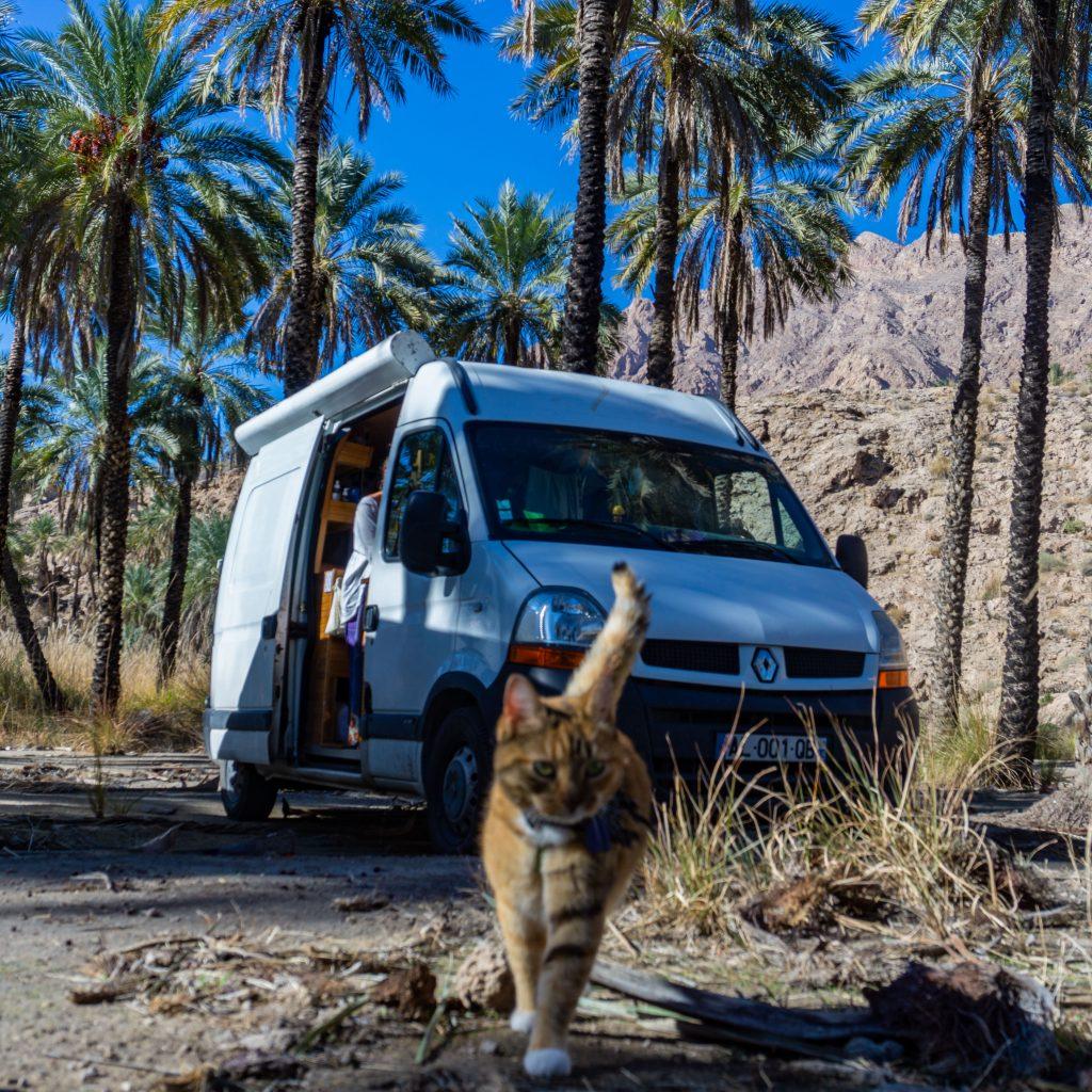route de la soie en Iran avec son chat